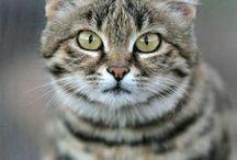 [ d&d ] - treasure / ( D&D // HIDDEN TREASURE ) - - Black Footed Cat / Tabaxi. Fighter / Brute.