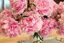 PEONIES..MY FAVORITE