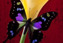 Butterflies / by Lynda Graham