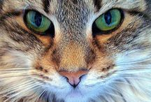 M ~ Maine Coon  Cats  and Thier Friends  ...etc... / Cute Cats   with Celebrities  Plus others / by Linda Sherrin