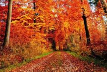 Fall/Autumn / by Rachel Gray