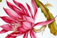....floral.Art.botanical.... / by art ingo