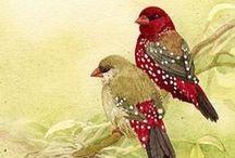 Birds of a feather / vintage / by Mary Jo Budde