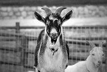 Animals / by Altus Photo Design