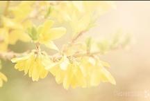 Spring Flowers / Spring Flowers for the garden