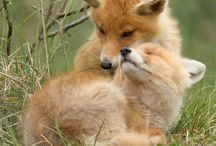 Foxes / Beautiful and smart. / by Mokkie Hamrer