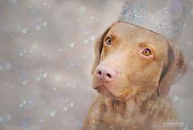 Chesapeake Bay Retrievers / The greatest breed!  / by Mokkie Hamrer