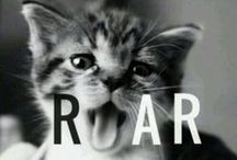 Cats / All about cats!