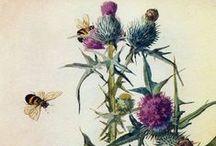 Botanical illustrations. / by Mokkie Hamrer