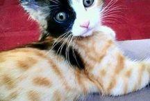 Katter. Love