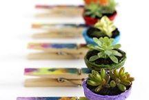 Succulentes / succulents