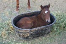 Horses I Love / by Cathy Claeys