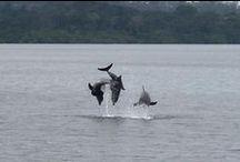 Bocas del Toro, Panama / #bocasdeltoro #charterbocas #Panamaislands