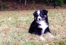 My adorable pup! / by Jennifer Willoughby