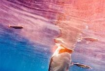Sharky / I love sharks.