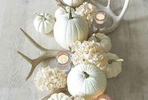 Fall Faves / All things Fall!
