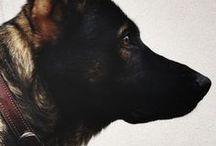 Dogstr - Hounds
