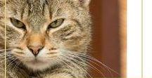 Arranhador para gato / Faça seu gato feliz, montando um arranhador que ele vai amar.