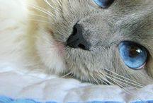 blue blue bule