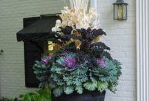 Garden ☆ Fall / Autumn garden ideas. / by Jenaria's Realm