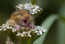 Smiling animals . . . so cute