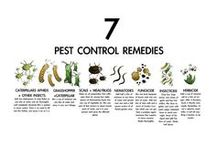 Garden ☆ Pests / Ideas on dealing with plant pests. / by Jenaria's Realm