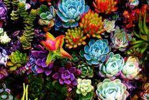 Succulents / by Kristen