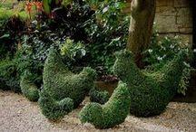 Landscape ☆ Hedges / I ♡ Hedges! Boxwood ♡ Bamboo ♡  / by Jenaria's Realm
