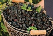 Garden ☆ Fruits / Fruit for the garden.  / by Jenaria's Realm