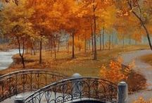 FALL / by Brittany