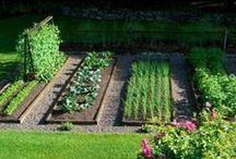 Gardening / by Jill Jenkins