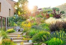 Water-Wise Landscaping / Drought-Tolerant Plants and Landscaping Ideas