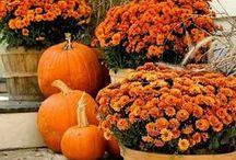 Feeling Like Fall / Home decor ideas for fall.