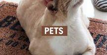 Pets / Casa de um, focinho do outro. Tem pro pet e pro humano dele também :)