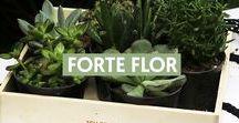 Forte Flor