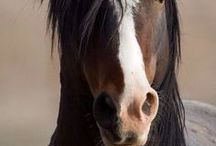 Beautiful Horses / The most beautiful horses. Random breeds