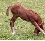 Horse stretching / Make your horse do yoga, its good for them :)