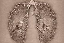 Arts découverte: Organes / Arts découverte: Organes, La découverte de talents en Arts dans le domaine des Organes Humain.