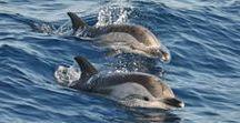 Observations diverses à partir du bateau Cala Rossa / Nager avec les dauphins côte d'azur #dauphins #cotedazur