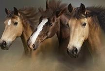 Horses!! ♥  them! / My love of horses!
