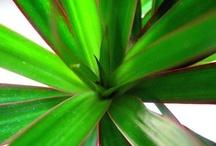 plants n things that grow