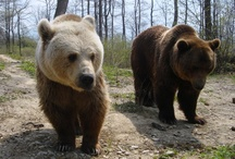 Bear sanctuary in Roumania founded by WSPA