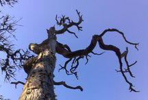 Mama's trees