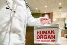 Organ Nation / Articles and items about the organ donation process.