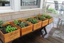 Gardening-Porch Decor / by Jessica Junkin
