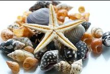 SHELLS / They're at the beach.  Need I say more? / by Ronni Rittenhouse