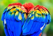 BEAUTIFUL BIRDS / Who knew such beauty abounds on the earth?  Everyone who looks up. / by Ronni Rittenhouse