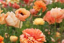 Flowers / by Carolinekatt