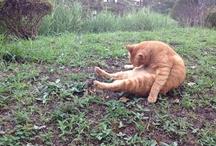 まちねこ - MACHI NEKO - / 町でみかけた猫をひたすらUP