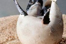 Żółwie ❤️
